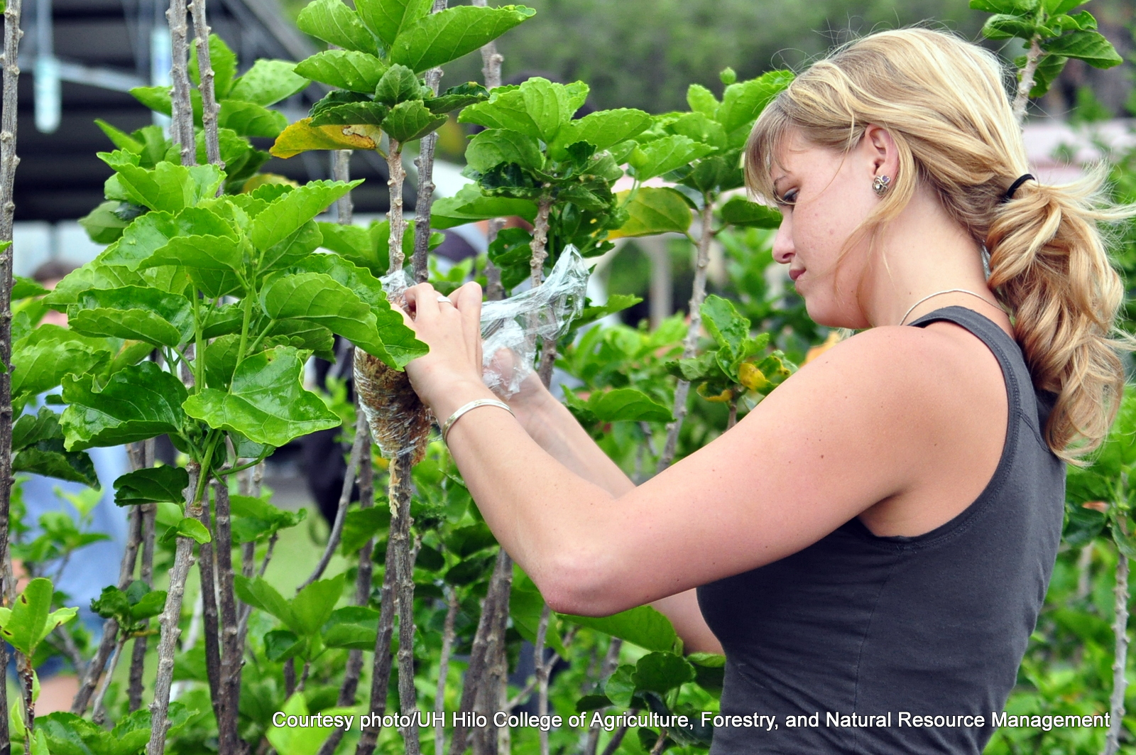 Maria McCarthy handling plants.