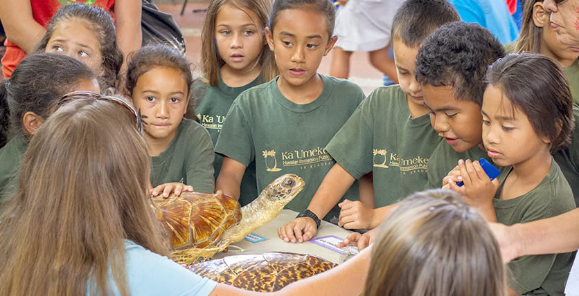 Earth Day Fair participants learn about Hawaiʻi's turtles.
