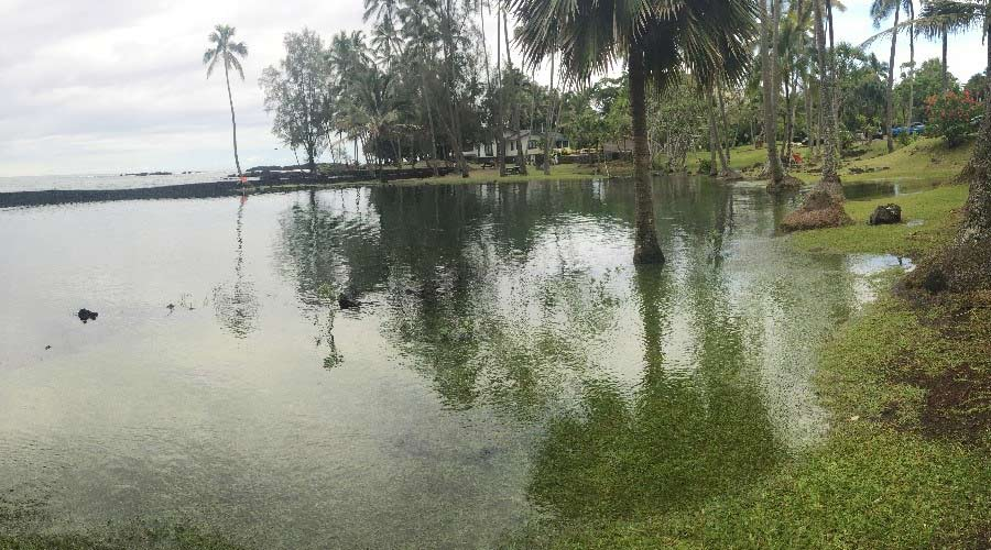 Adaptive management at Honokea Loko (traditional fishpond): understanding the dynamic meeting point of marine, freshwater, and terrestrial systems. Photo credit Kamala Anthony, UH Hilo.