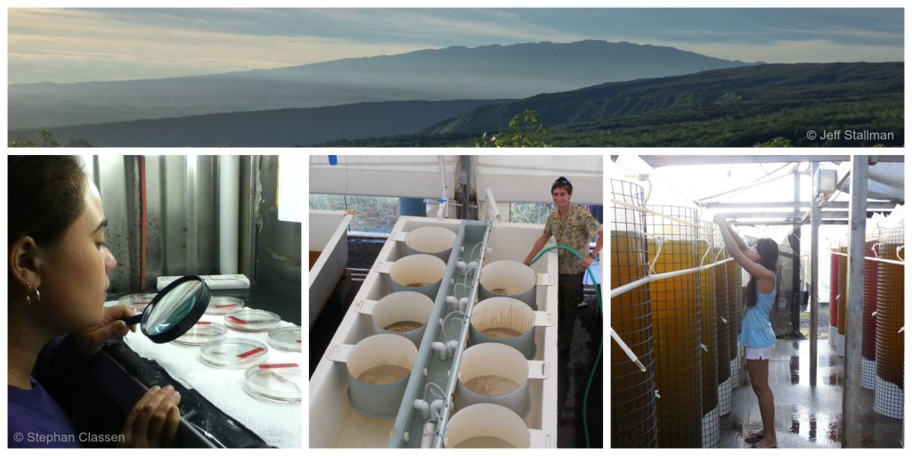 Pacific Aquaculture & Coastal Resources Center. Photos: Jeff Stallman (Top), Stephan Classen (Bottom)