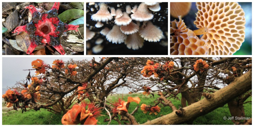 Mushroom species found on Hawaiʻi Island. Photos: Jeff Stallman