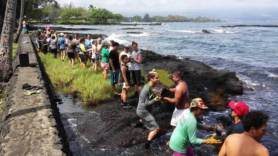 Students working at Honokea Loko iʻa, halihali pohaku.