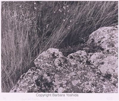 Rocks and Grasses