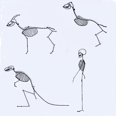 Nice Goat Leg Anatomy Vignette - Anatomy And Physiology Biology ...